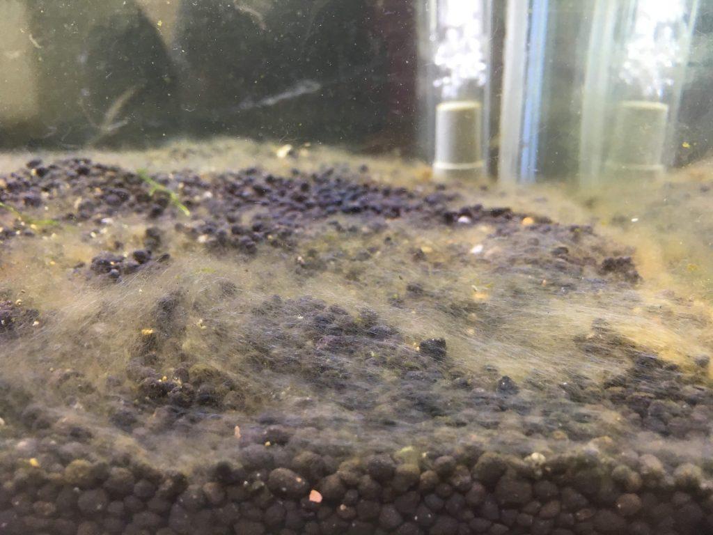水槽 40 センチ